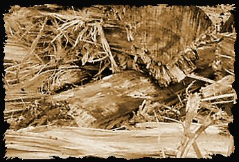 2. Photo of elm logs shows that elm is a stringy wood